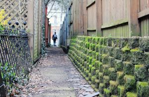 A cozy mossy alley by theblindalley