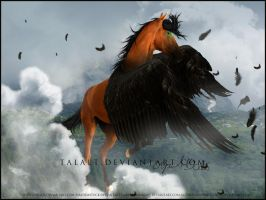 Freedom by Aspasia-Project
