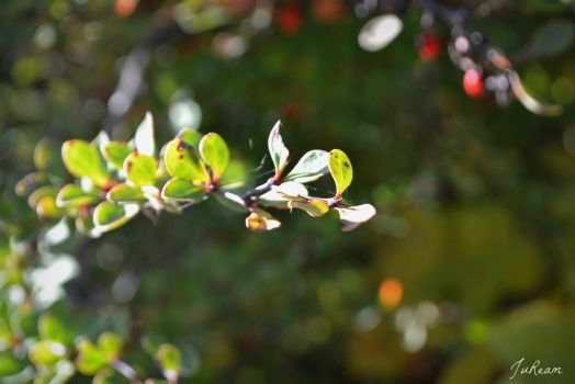Tiny Green Leaves by JuReam