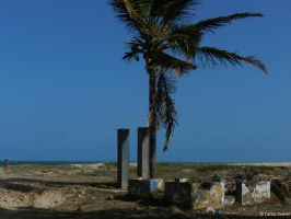 Old Coconuts by andreibsc