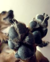 Puppy paws by TheHouseMouse