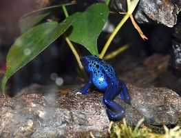 Blue Frog by FrankAndCarySTOCK