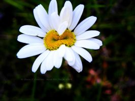 Conjoined Twins by Dreamz-of-Twilight