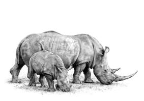 White Rhinoceros and infant by arhicks
