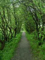 forest path by ForestGirlStock