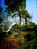 Trees at Alderley Edge by Spikey-T