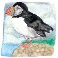 Puffin by Paintwick