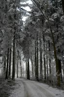 Winter Forest by sun-stock