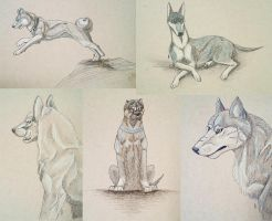 Ginga Drawings by Lord-of-Rappigs