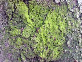 Free photo texture - Mossy pine bark #3 by croicroga