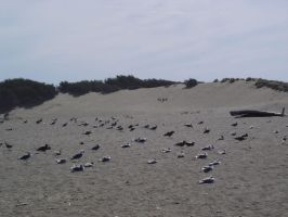 Beach: Flock of Seagulls by sc4mp1