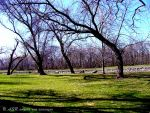 The Park Trees by LoneVixen