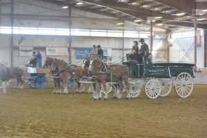 Topsfield Fair, Horse Handler Competition 2 by Miss-Tbones