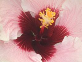 SFBG_Flower3 by cynders-song