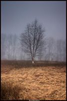 Lonely Birch by alexiuss
