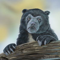 Confession Bear by KatrineH