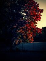 Autum leaves by TiredMe