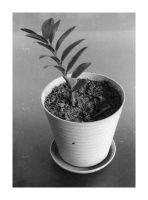 vase of plant by momentoes