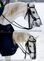Hungarian Bridle by Colourize-Stock