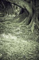 tree roots by tspargo-photography