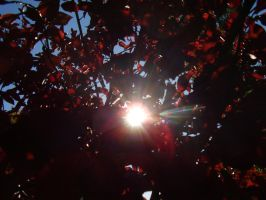 Crimson Autumn Sun by Pentacle5