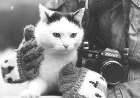 Photo Cat by oldschoolowyradeg