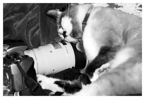 Cali Loves My Camera by ewm