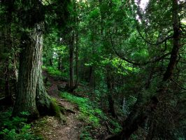 Through the Woods by eightball-599