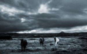 Wild Welsh Ponies 5 by welshdragon
