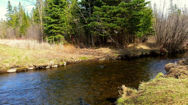 Trout River by Fishingkid