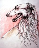 Borzoi by newfka