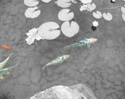Selective Color Pond Fish by Loffy0