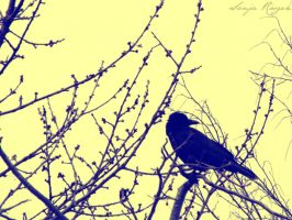 Raven in the tree by Imperable