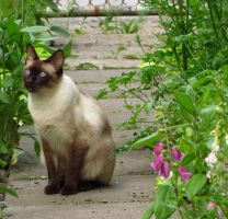 Garden Cat by Kitteh-Pawz