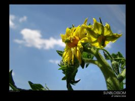 Sunblossom by phix850