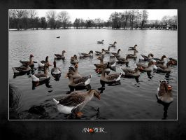 CATCH A COLD by ANOZER