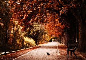 The October Road by Peterix