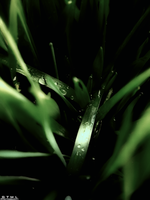 Water Droplets - Movie Tone by OneofakindKnight