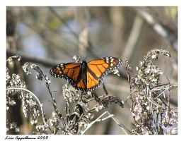 His Majesty by Cillana