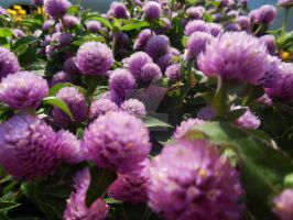 Sea of Blossoms by AlissaDStock