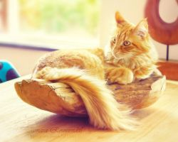 Fruit bowl kitty by TammyPhotography