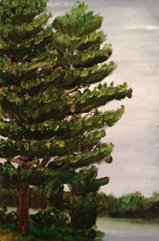 White Pine Study by Goalie89