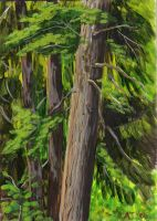 Cedar, Tualatin Nature Park by Pointy-Eared-Fiend