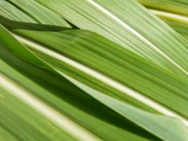 Sugar cane by brightstyle