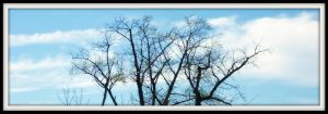 Treetops In The Sky by Rainbow826