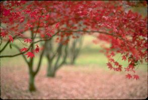 red leaves by personage
