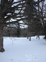 Bare Winter Tree Background 5 by FantasyStock