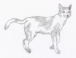 Specklepelt by wolfforce58