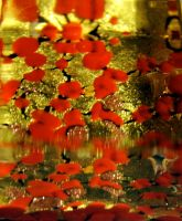 Red and gold by martaraff