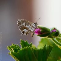 75. Butterfly by FrancescaDelfino